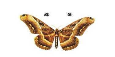 上海蝶盛家具有限公司